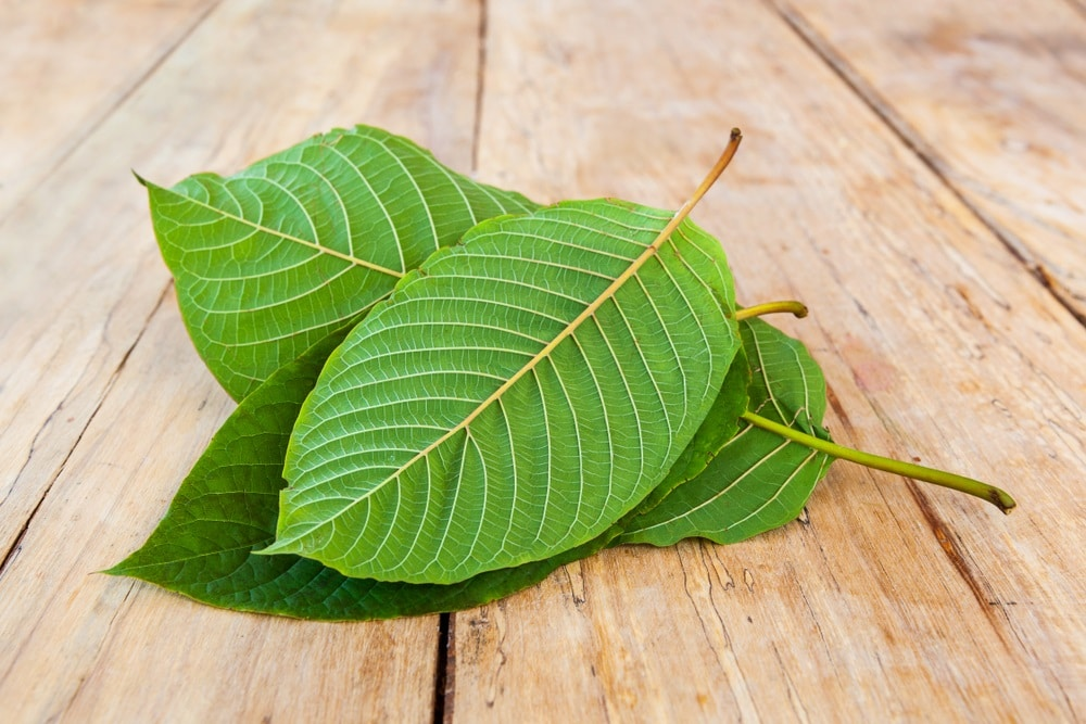 red elephant kratom benefits