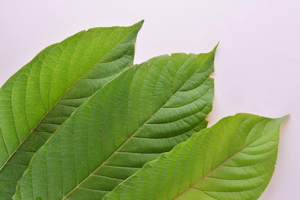 Green Papua Kratom Dosage