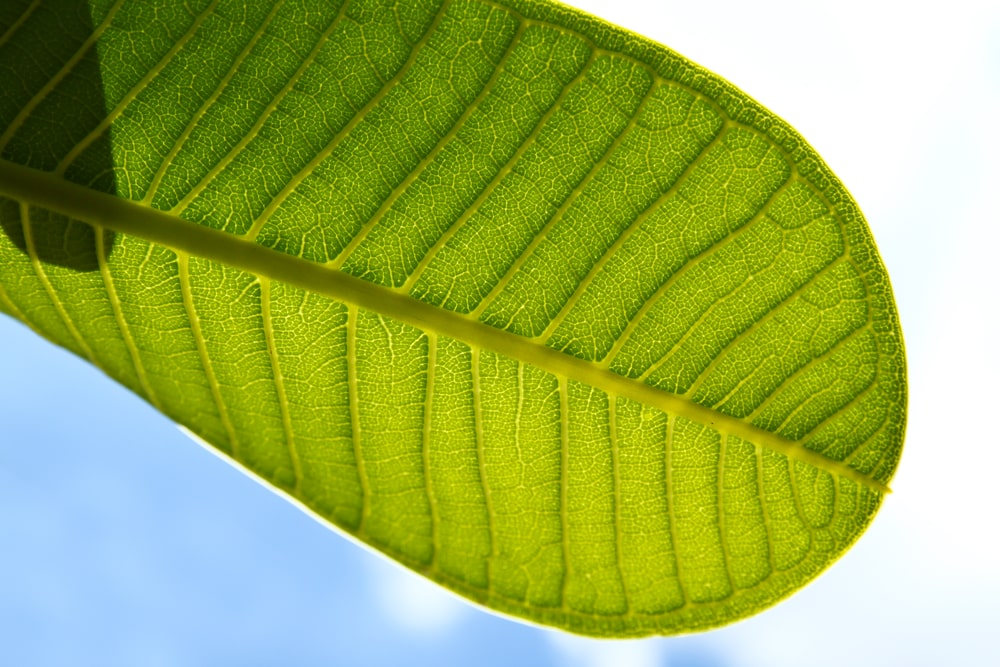 Super Green Bali Kratom Benefits