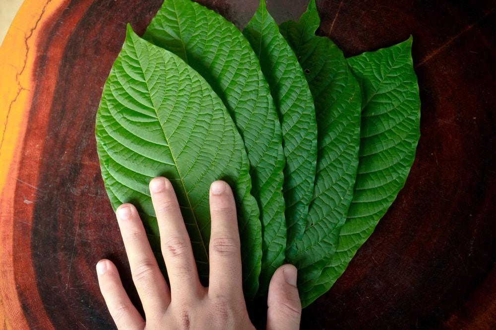 green hulu kratom benefits