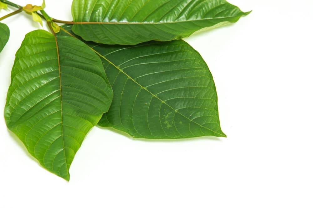 Yellow Vietnam Kratom Benefits
