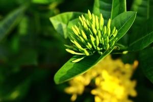 Green Harmony Kratom Vendor Review