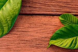 VLNT Herb Vendor Review