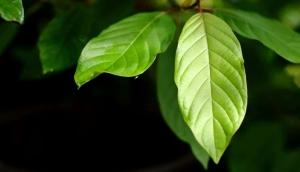 Botanical Kratom Vendor Review