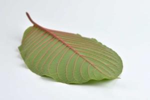 EE Botanicals Vendor