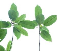EE Botanicals Vendor Review