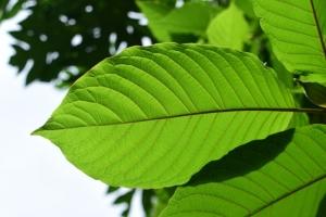 Garden Zen Herbs Vendor