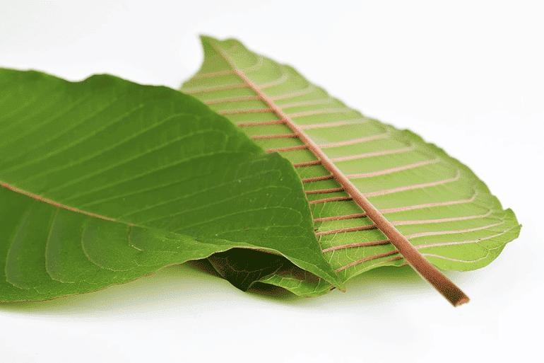 Kratom Leaf US Vendor Review